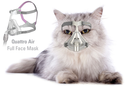 [Image: cat-mask.jpg]